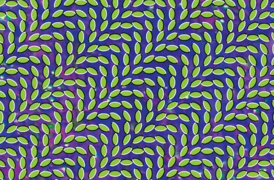 animal collective disco en directo